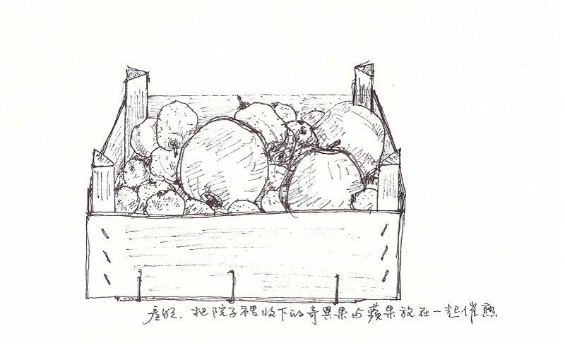 把奇異果和蘋果置放在一起ˍ催熟。(作者手繪/印刻文學提供)