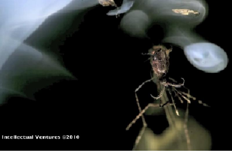 蓋茲基金會投入大筆經費作滅蚊研究。(資料來源: Intellectual Ventures, 視頻截圖)