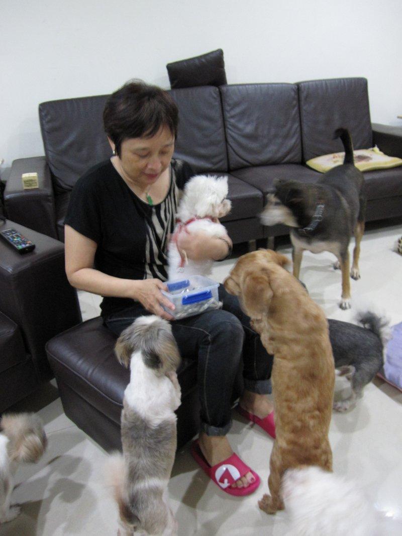 天如專題0924-01-自稱「個體戶」的聞姐投入流浪狗救援6、7年,自己家中已有8隻狗、4隻貓。(黃天如攝).jpg
