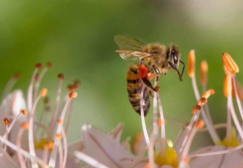 科學家發現昆蟲也有學習能力,像是蜜蜂寧被教導更能把所學傳給同伴。(圖/designerpoint@Pixabay)