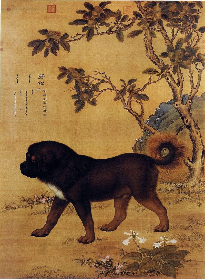 由清代的義大利畫家朗世寧所繪的藏獒。(wikipedia/public domain)
