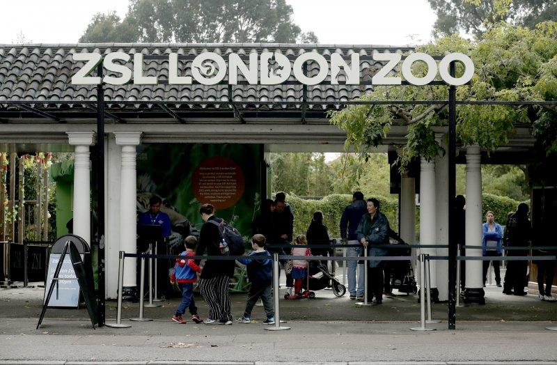 倫敦這家動物園14日發生大猩猩脫逃事件。(美聯社)