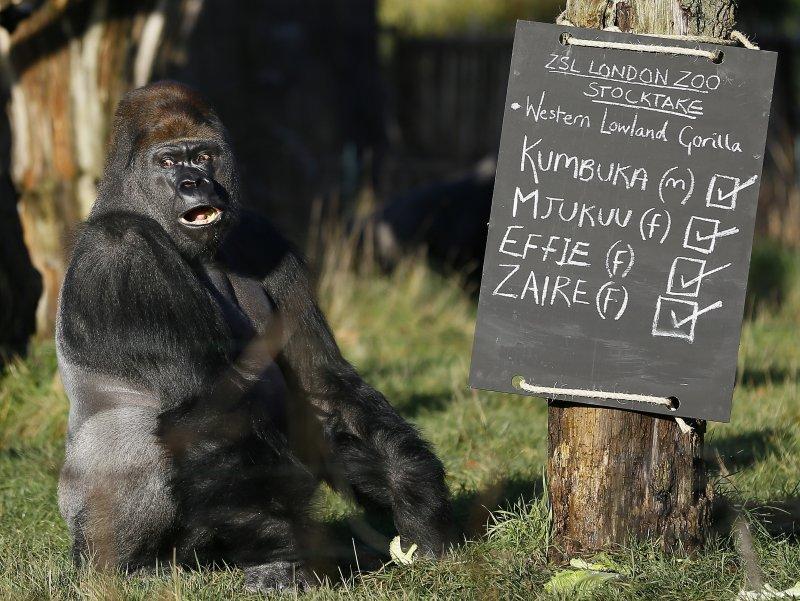 野生動物權威呼籲,人類圈養動物觀賞應透過小孔而非玻璃,以保護動物情緒。(美聯社)