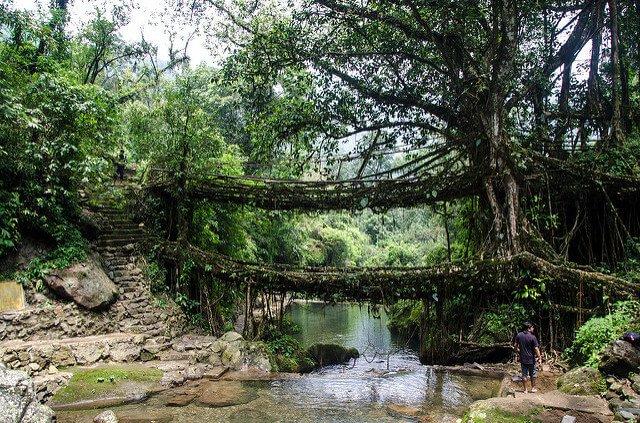 泰國活樹橋。(圖/Ashwin Kumar@Flickr,hotelscombined提供)