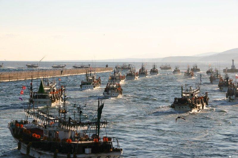 遊客觀光中心的對面就是漁港,8月至12月除了雨天,幾乎天天可看到這幅畫面,捕魷魚的船形成浩瀚的隊形,幕幕震撼。(圖/MATCHA提供)