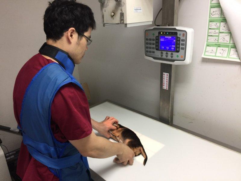 (圖/新北市政府農業局動物保護防疫處提供)