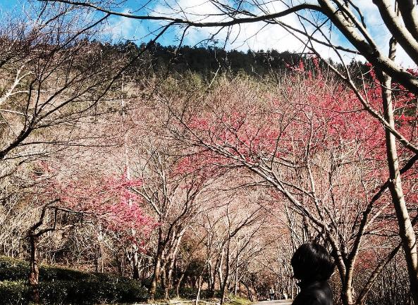 武陵農場以絕美景致名列第2。(圖/cora_foodnclo@instagram)