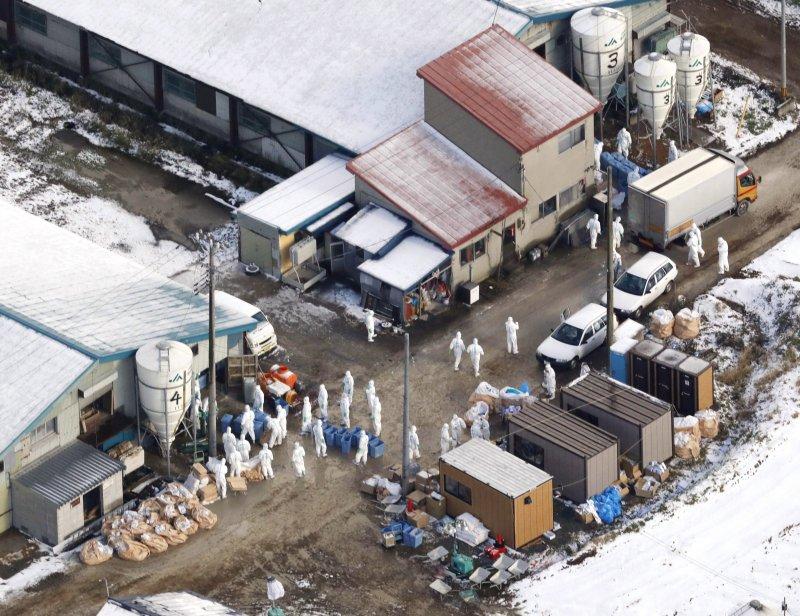 禽流感容易演變為人傳人,各國都會高度戒備,這是日本的公衛人員對一家養雞場進行調查與防疫。(AP)