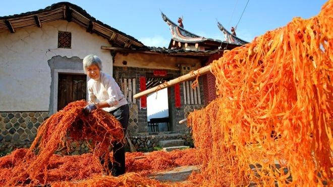 不要的柿子皮可以用來餵牲畜,不浪費任何東西。(BBC中文網)