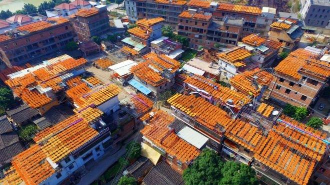 空中俯瞰福建泉州屋頂曬的柿子。(BBC中文網)