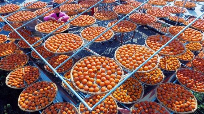 曬乾的柿子叫柿餅,是當地的一種特產,非常受歡迎。(BBC中文網)