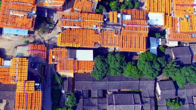 每年,當地居民都利用充足的陽光在屋頂曬柿子,做成柿餅再出售。(BBC中文網)