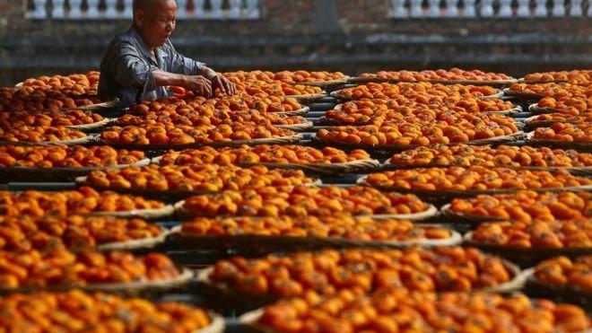 柿子在中國和東亞的許多國家是常見的水果,現在在英國也開始受到歡迎。(BBC中文網)
