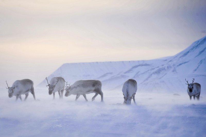 全球暖化,氣候變遷,聖誕老人,馴鹿,雪橇。(美聯社)