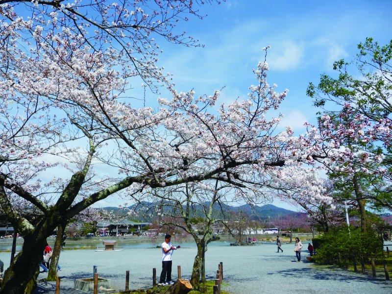渡月橋(圖/健行文化提供)