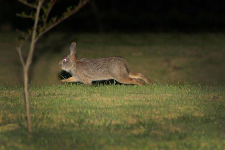 別看兔子很溫順,為了搶愛也會打架。(圖/時報出版提供)