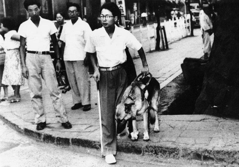 河相和日本首隻導盲犬「チャンピイ」的訓練過程。(翻攝eyemate官網)