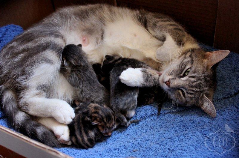 幼貓發出的咕嚕聲,是在像母貓傳達訊息。(圖/echoe69@flickr)