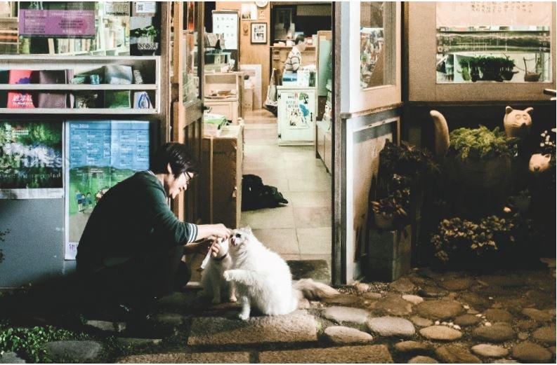 夜晚人們結束一天工作,此刻是貓咪的晚餐時光。在古樸且雅緻的書店裡,人和貓共處於同一個空間。(圖/小日子提供)