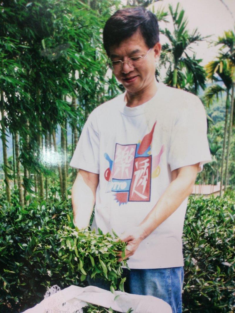 老闆黃正忠在茶園裡採摘茶菁,準備製茶。(天芳茶園提供)