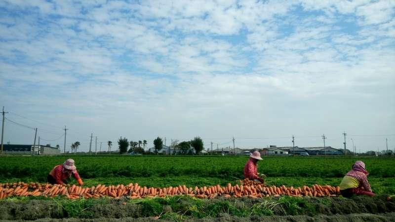 農業發展條例修訂,開放不具農民資格的人也可買農地,毫無管理跟限制,使得無數的良田成為了農舍(吳佳玲攝)