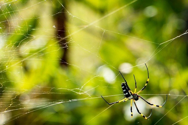 蜘蛛。(圖/遠見雜誌提供)