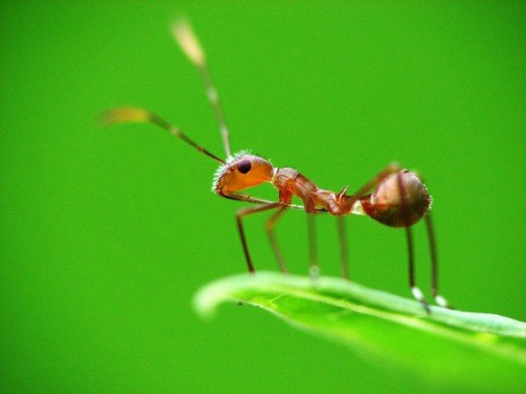 螞蟻。(圖/遠見雜誌提供)