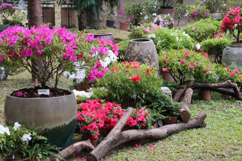 台北市杜鵑花季。(圖取自台北市政府官網)