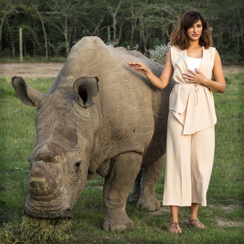 全球碩果僅存雄性北白犀牛「蘇丹」與美國籍女演員納吉絲.法赫利(Wikipedia/Public Domain)