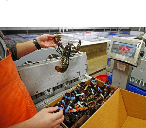 過去幾十年來,中國對海產的需求大增,已占全球消費量1/3。(美聯社)