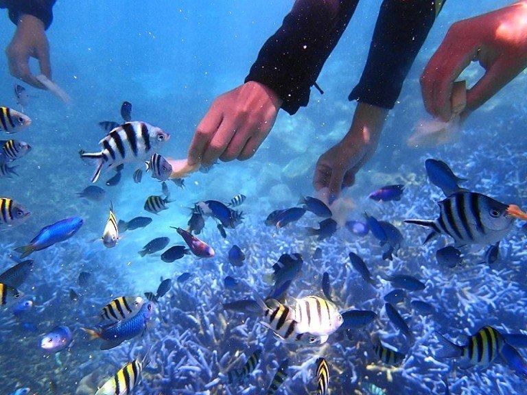 七美的海底世界是澎湖幾處僅存保育良好的浮潛地區!(圖/klook客路提供)