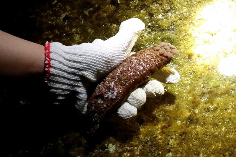 夜訪潮間帶能夠看到各式各樣的生物。(圖/俞嘉琦 拍攝)