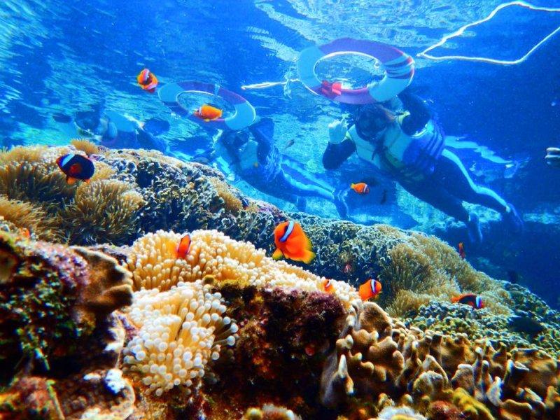 蘭嶼被評選為世界第11名的潛水地點。(圖/看海的日子 粉絲專頁)