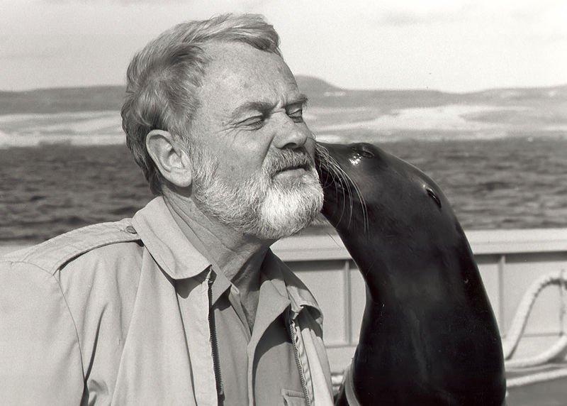 海獅聰明、靈巧,可愛外表常讓人忘記其動物本質。(維基百科公有領域)