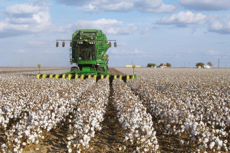 棉花,在種植的過程中需要使用大量的肥料和水,抽紗的過程中也需消耗非常多的能量。圖片來源:KimberlyVardeman(CCBY2.0)(圖/綠藤生機提供)