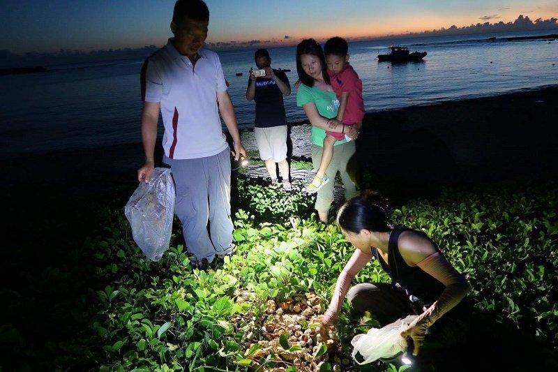 去海灘給寄居蟹投殼。(作者提供)
