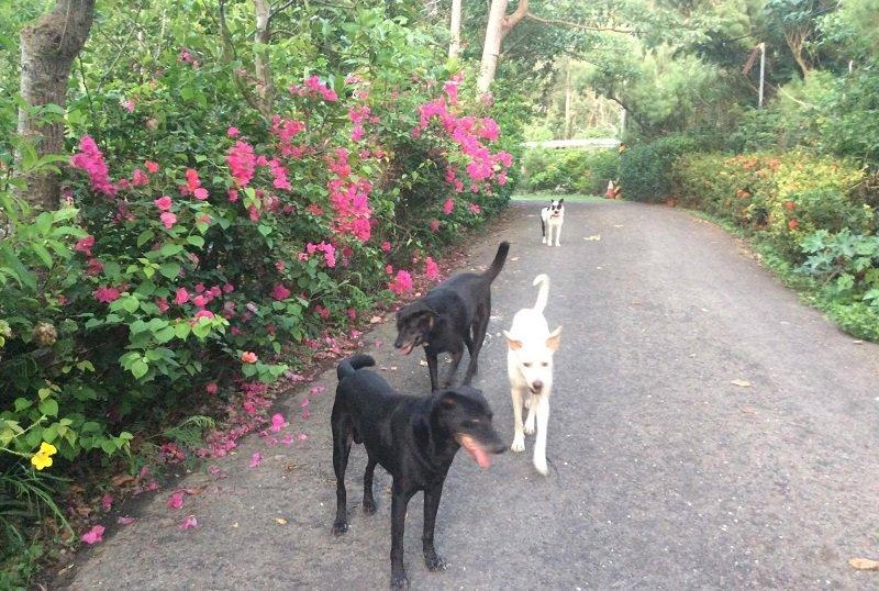 走近黑貓姐的農莊,最早出來迎接的,一定是她的朋友,一隊狗狗。(作者提供)