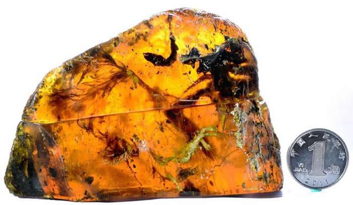 緬甸琥珀中驚見一億年前的幼鳥屍體。