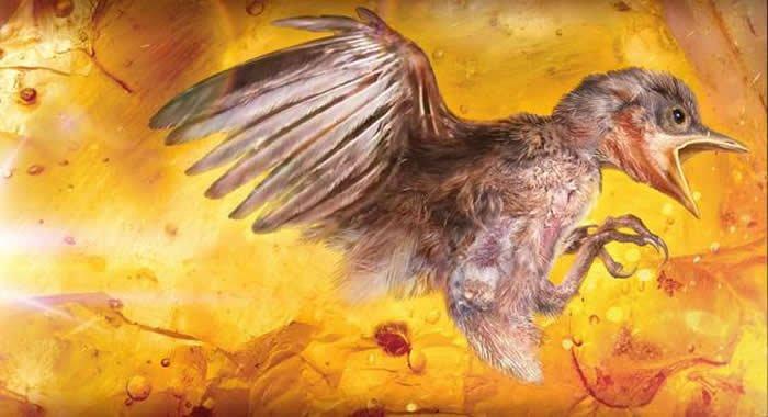 一億年前幼鳥的想像圖。