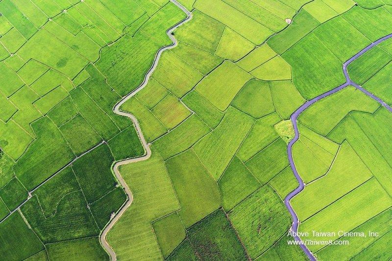 台灣翠綠的稻田。(圖片:看見台灣FB;想想論壇提供)