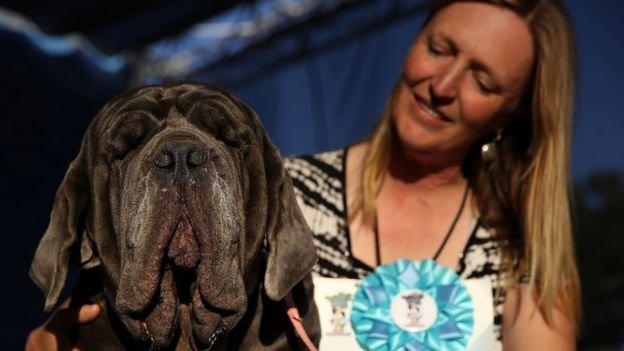 三歲的瑪莎曾經是搜救犬,後來患眼疾幾乎失明,被辛德勒收養。(BBC中文網)