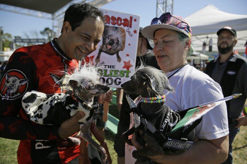2017年「全球最醜狗狗」(World's Ugliest Dog)大賽參賽狗(AP)