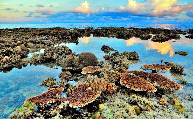20170704,《被遺忘的國境,太平島》太平島外露珊瑚(圖為大是文化提供)