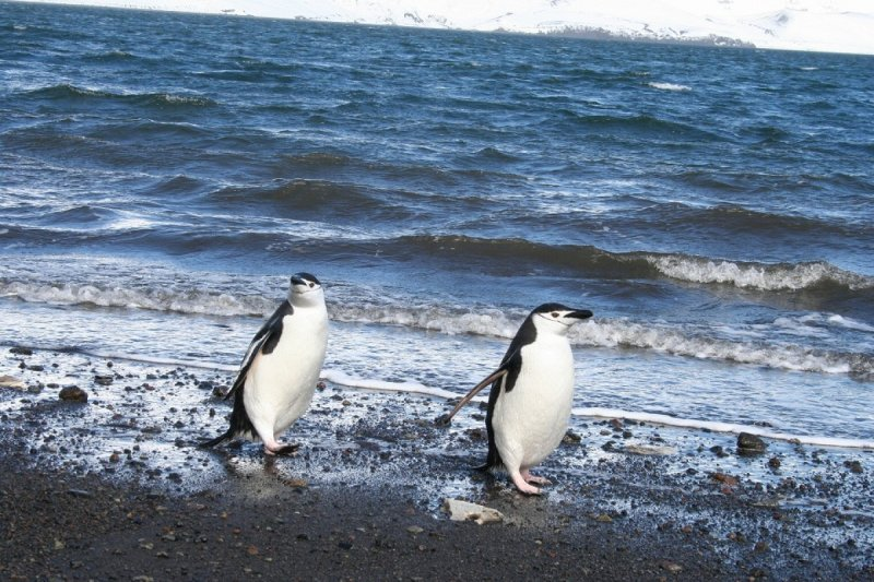 可邊欣賞企鵝邊泡湯的溫泉(圖/ZEKKEI Japan提供)