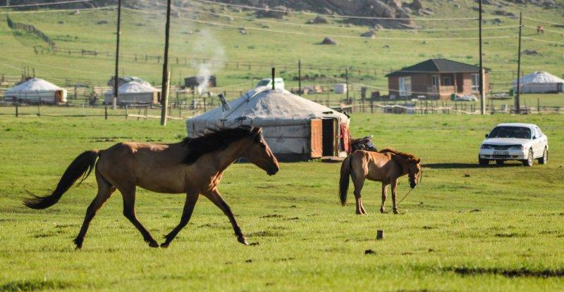 在蒙古草原上,牧民們並不擔心飛漲的物價,只掛心能否獲得溫飽的羊群馬兒。(圖/Erdenebayar@pixabay)