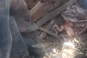 印尼新生嬰遭棄化糞池,奇蹟生還(截自網路)
