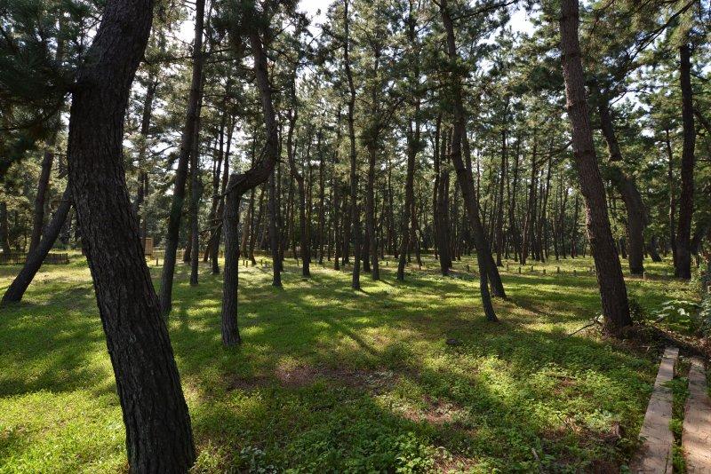 氣比松原為日本三大松原之一。(圖/時報出版提供)