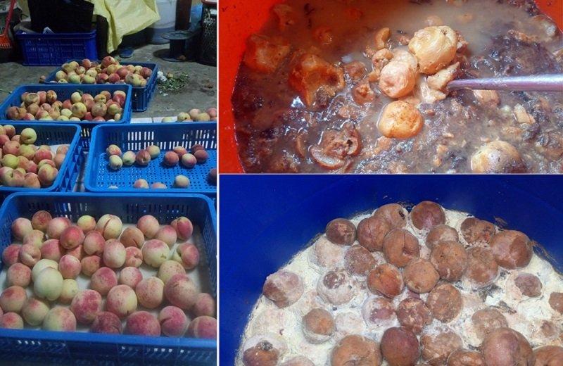 水蜜桃的農損約五成,前期七成,後期三成(左);去年變成堆肥的水蜜桃(右上), 以及今年的(右下)。(抬耀農友taway提供)