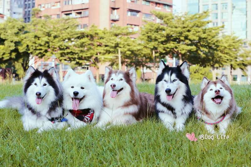 (圖/哈Dog Life 臉書)