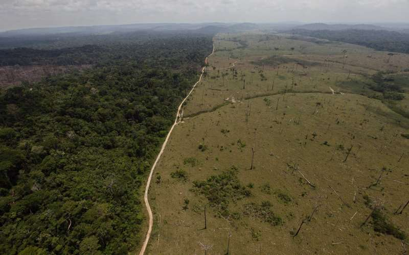 巴西總統特梅爾欲通過雨林開發案遭法院擋下,圖為爭議中的雨林保護區。(美聯社)